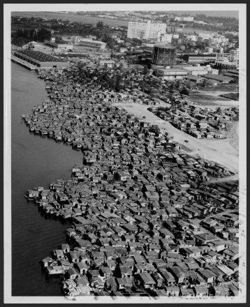 EL Fanguito, Hoare 1953